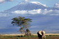 Elephant in front of Mt Kilimanjaro